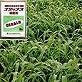 スダックス緑肥用(農業用ソルゴー) 1kg[4~8月まき][タネ][緑肥作物、線虫抑制や土壌の硬盤破砕、除塩、防風] 園芸ネット