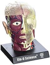 Bio Signs Human Anatomy - Brain & Skull
