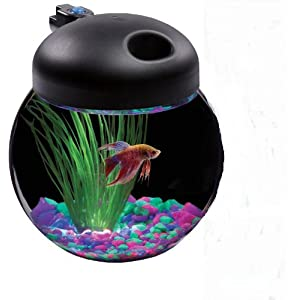Multi - colored LED enabled Globe Bowl Shaped Aquarium Kit by KollerCraft - Model Number Aq100004c