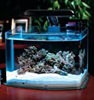 JBJ Picotope Curved Glass Nano Aquarium Kit 3 Gallon