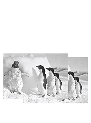 Nouvelles Images Iced Case Adelie Penguins 2-Pack Greeting Cards