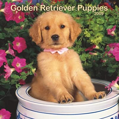 Golden Retriever Puppies 2009 Calendar