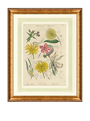 1837 Antique Hand Colored Yellow Botanical Print XIII, French Mat