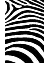 ZAGG Zebra for Apple iPhone 3G/3GS