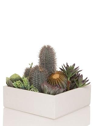 Concoral Composición Compo 2 Cactus