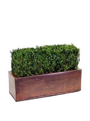 Forever Green Art Handmade Table Top Juniper Hedge