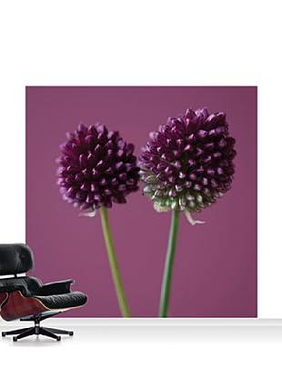 Clive Nichols Photography The Purple Flowers of Allium Sphaerocephalon Mural, Standard, 8' x 8'