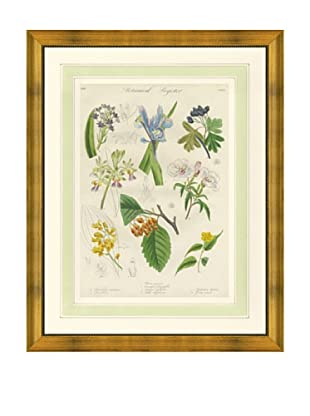 1837 Antique Hand Colored Blue Botanical Print, French Mat