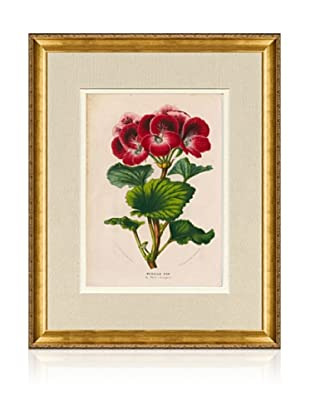 1873 Antique Botanical Print VII, Ornate Gold