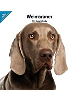 Weimaraner 2014  Wall Calendar