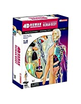 4 D Vision Half Cleared Human Anatomy Model