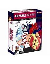 Tedco Human Anatomy - Deluxe Heart Anatomy Model