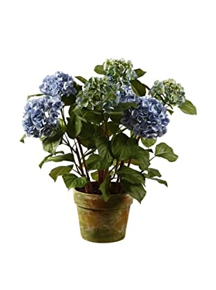 Winward Hydrangea in Pot, Light Blue