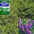 ヘアリーベッチ まめっこ 1kg入り[タネ][緑肥、景観作物][9~11月、3~5月まき] 園芸ネット