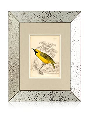 1854 Mirror Frame Bird Print III
