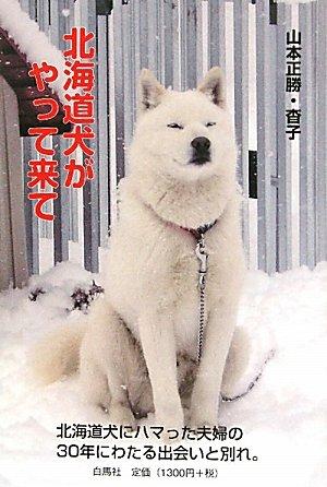 北海道犬がやって来て