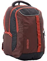 American Tourister Buzz Nylon Brown and Rust Laptop Backpack
