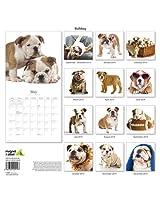 Bulldog 2014 Wall Calendar