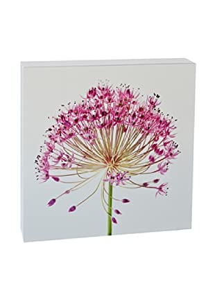 Art Block Fucshia Fan - Fine Art Photography On Lacquered Wood Blocks
