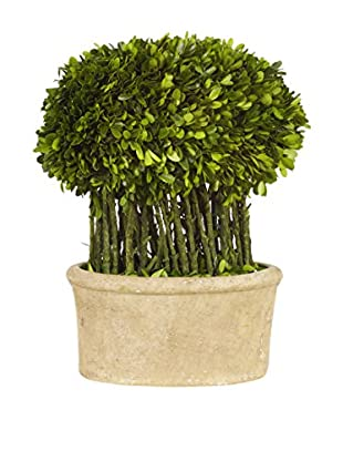Winward Oval Boxwood Topiary, Green