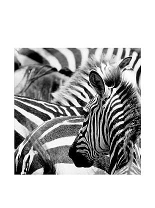 Lienzos Decoración Vertical Zebra Lienzo