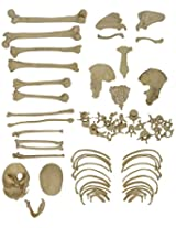 Biolab India PVC Disarticulated Human Skeleton Model (Light Cream )