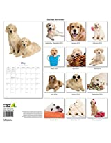 Golden Retriever 2014 Wall Calendar