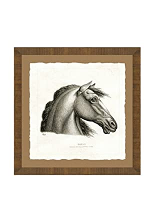 Horse Head Giclée Print I