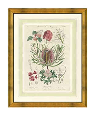 1837 Antique Hand Colored Pink Botanical Print, French Mat