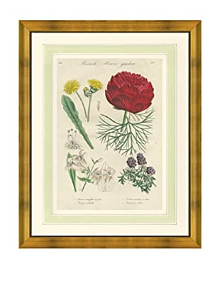 1837 Antique Hand Colored Red Botanical Print II, French Mat