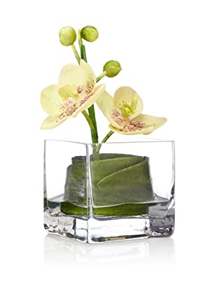 Flower Fusion Orchid in Square Glass, Green