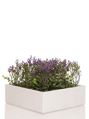 Concoral Concobox Eucaliptus Flor Violeta