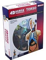 Tedco Human Anatomy Torso