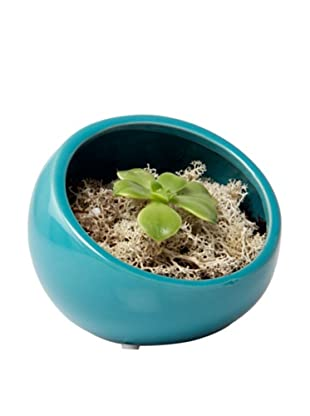 Chive Teal Half Moon Terrarium Bowl