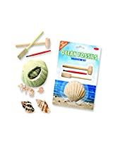 Ocean Fossil Shells Dig (Age 5+) - dig and discover!