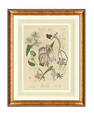 1837 Antique Hand Colored White Botanical Print III, French Mat