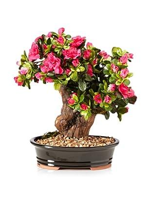 Spazio per crescere voga italia donne uomini e la for Accessori per bonsai