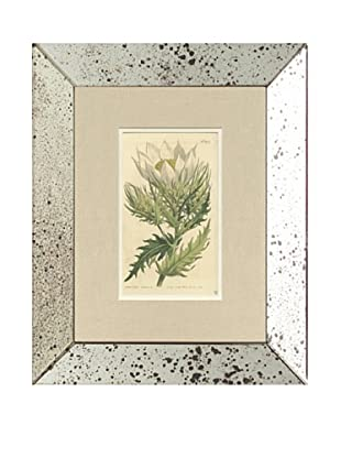 1812 Antique Hand Colored White Botanical, Mirror Frame