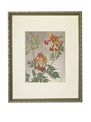 1903 Virginia Jasmine Botanical Chromolithograph
