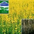 ネマクリーン 1kg[5~7月まき][タネ][土壌線虫抑制、窒素固定、緑肥] 園芸ネット