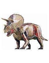 4D Triceratops Anatomy Model by John N. Hansen Co.