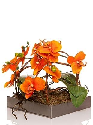 Concoral Composición Orquídea Naranja