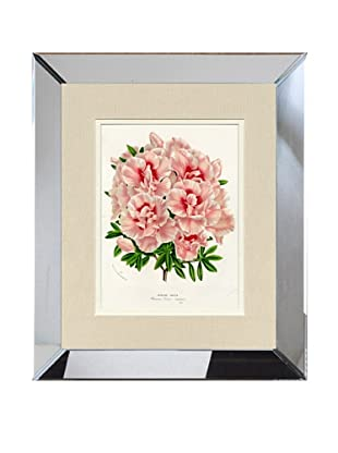 Vintage Print Gallery Antique Hand-Finished Azalea Print, Circa 1850's