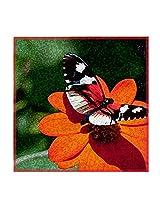Leaf Designs Butterfly On Red Flower Trivet - Set Of 6