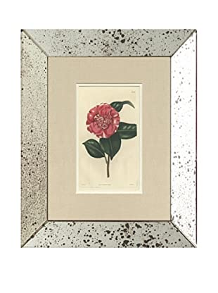 1815 Antique Hand Colored Pink Botanical, Mirror Frame