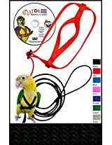 The AVIATOR Bird Harness and Leash: Petite Black
