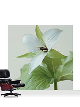Clive Nichols Photography The White Flower of Trillium Simile Mural, Standard, 8' x 8'