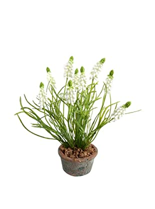 New Growth Designs Grape Hyacinth In Terracotta Pot