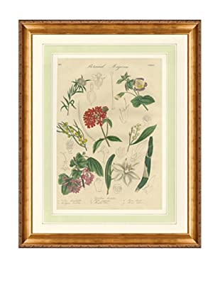 1837 Antique Hand Colored Red Botanical Print VII, French Mat
