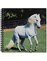 3dRose db_101022_1 Photo of Beautiful Arabian White Horse-Drawing Book, 8 by 8-Inch